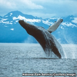 Whales and mountains are often described as 'majestic.' This photo has both!