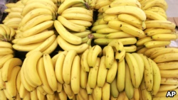 The word 'banana' is believed to be of Wolof origin.