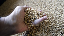 The U.S. is a major exporter of soybean to China but some farmers are concerned about the trade situation between the sides.