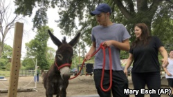 Donkey Park visitor Evan Oster leads a small donkey through an obstacle course as volunteer Patti Lundgren looks on, at Donkey Park in Ulster Park, N.Y.