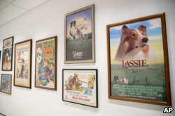 This Wednesday, Jan. 9, 2019, photo shows a wall of movie posters celebrating canine stars on display at the American Kennel Club Museum of the Dog in New York.