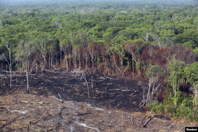 An area of the Xingu National Park in the Amazon rainforest, which has been cut and burnt.
