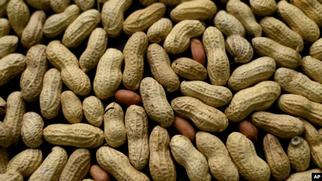 Doctors: Give Babies Crushed Peanuts to Reduce Allergy Risk