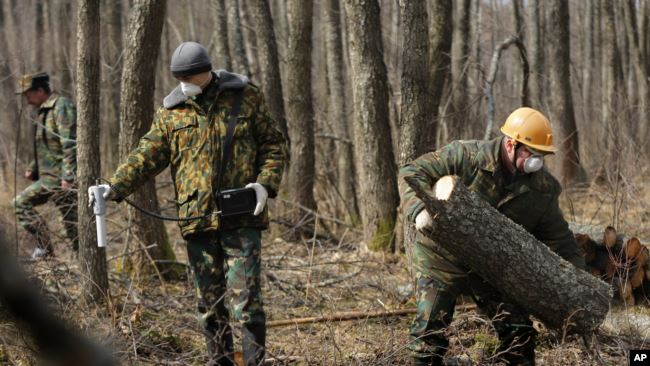In this Wednesday, March 23, 2011 photo an engineer Sergei Horloogijn measures a radiation dosage rate, as workers clear the forest near the village of Babchin, near the 30 km exclusion zone around the Chernobyl nuclear reactor.