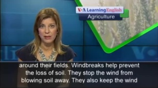 Building a Windbreak Protects Crops