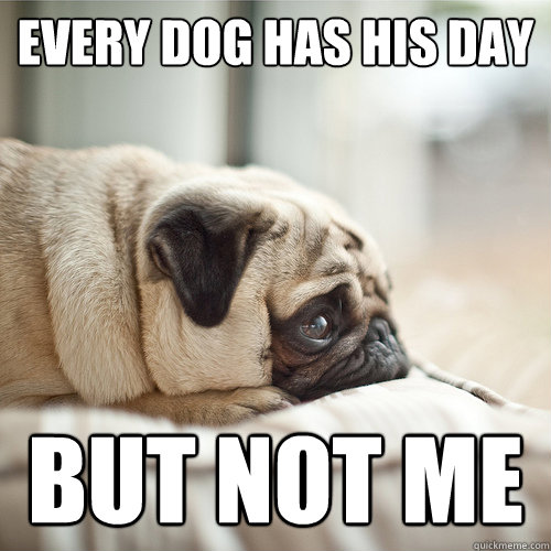 Every Dog Has Its Day But Not Me